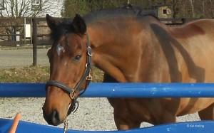 Wie Viel Futter Braucht Mein Pferd?