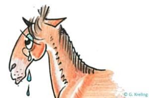 Tränende Augen Beim Pferd