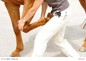 Pferdetierarzt