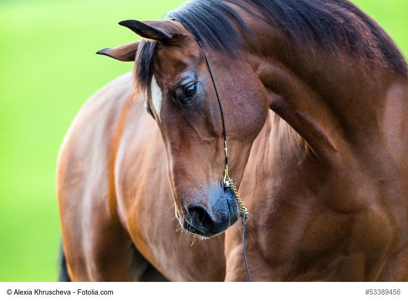 gesundes Pferd