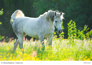 Frühjahr = Weidezeit – Welche Pflanzen Sind Ein Problem?