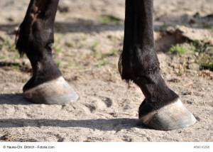 Der Huf – Ein Wichtiges Organ Des Pferdes!