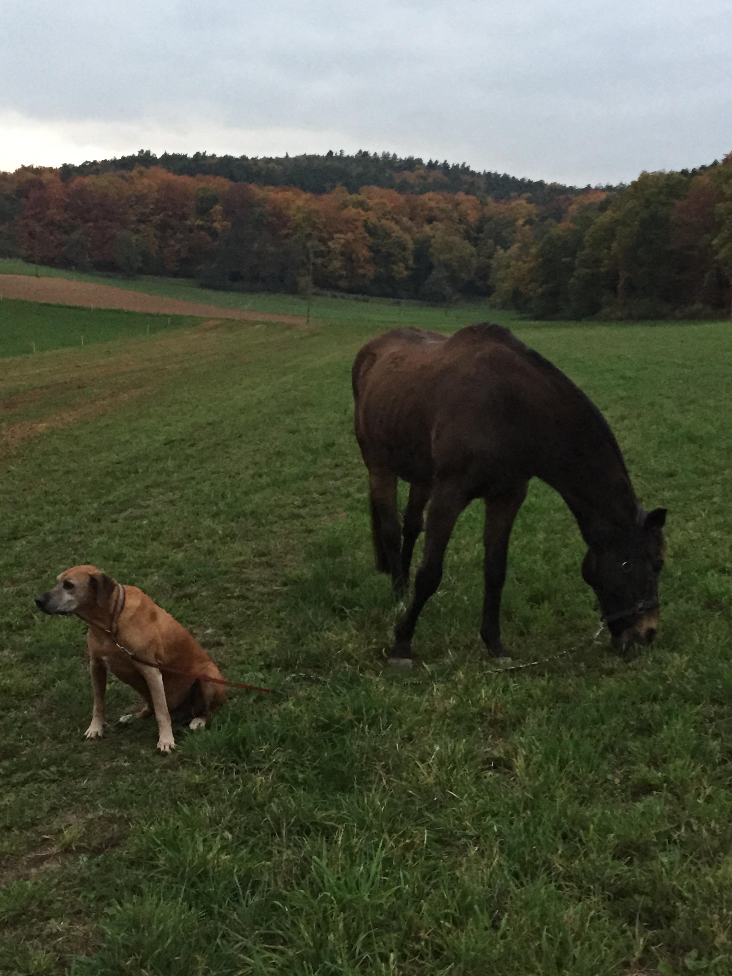 Rusty Nail Bei Pferdegesunheit Online